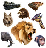 Animal heads icons Royalty Free Stock Photography