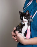 Animal Health Care Stock Photography