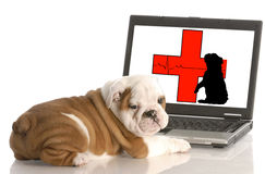Animal health online. Looking for animal health information online stock photo
