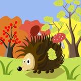 Animal Hedgehog cartoon. Hedgehog animal nature illustration beautiful background vector Royalty Free Stock Images