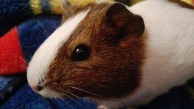 Animal hermoso Fotografía de archivo libre de regalías