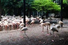 Animal hermoso del flamenco del primer en los parques p?blicos fotografía de archivo libre de regalías