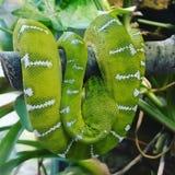 Animal hermoso del verde del parque zoológico de la serpiente Imagen de archivo libre de regalías