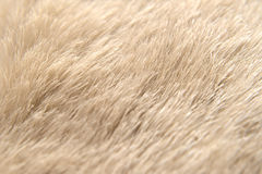 Animal hide detail, animal background Royalty Free Stock Images