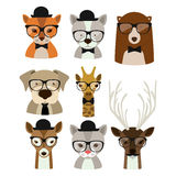 Animal hipster design Royalty Free Stock Image