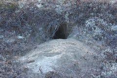 Animal hole on the sandy shore. royalty free stock photos