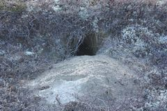 Animal hole on the sandy shore. royalty free stock photos
