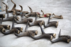 Animal horns Stock Photo