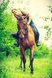 Young woman hugging and leaning out of house. Animal, horsemanship concept. Young woman sitting on horse and leaning out of it stock images