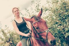 Young woman sitting on a horse. Animal, horsemanship concept. Young woman sitting and ridding on a horse through garden on sunny spring day royalty free stock images