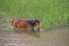 The animal Horses are eating grass Stock Photo