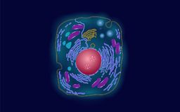 Animal human cell structure educational science. Microscope 3d eukaryotic nucleus organelle medicine technology analysis. Glowing colored biology poster vector illustration