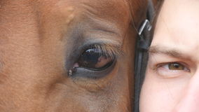 Animal and human eye - horse and man looking together at camera. Close up view of the eye of a beautiful brown stallion stock footage