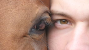 Animal and human eye - horse and man looking together at camera. Close up view of the eye of a beautiful brown stallion. And young handsome guy. Detail sight stock footage