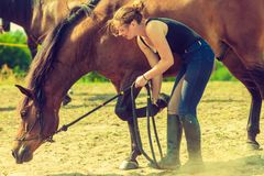 Jockey woman taking care of horse Stock Photography