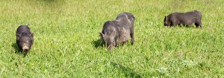 Animal husbandry Royalty Free Stock Photography