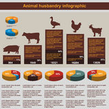 Animal husbandry infographic, agriculture, , flat design, elements Stock Photography