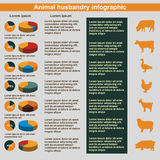 Animal husbandry infographic, agriculture, , flat design, elements Stock Images