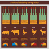 Animal husbandry infographic, agriculture, , flat design, elements Royalty Free Stock Photography