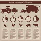 Animal husbandry infographic, agriculture, , flat design, elements Stock Photos