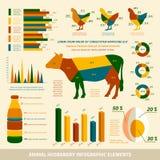 Animal Husbandry Infographics Flat Design Elements Royalty Free Stock Image