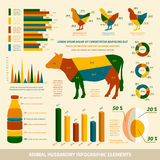 Animal husbandry infographics flat design elements Royalty Free Stock Image