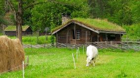 Animal husbandry livestock breeding, norwagian village, green grass rooftop, norway stock video footage
