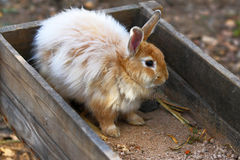 Rabbit on a farm Stock Photos