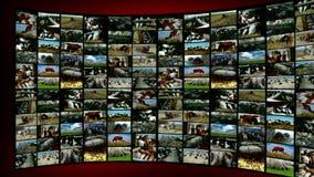 Animal Husbandry- split screen stock video