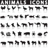 Animal icons set. On a white background with a shadow royalty free illustration