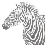 Animal illustration of vector black zebra striped silhouette. EPS vector illustration