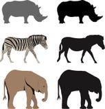 Animal illustrations. Illustrations of zebra,rhino and elephant Stock Image