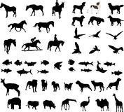 Animal illustrations. Illustrations of pets and wildlife Royalty Free Stock Photos