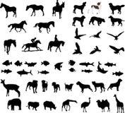 Animal illustrations Royalty Free Stock Photos