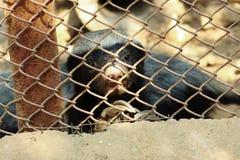 Animal inocente dentro de un parque zoológico foto de archivo