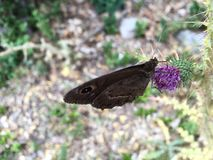 Butterflies other. Animal, insect, flower Royalty Free Stock Image