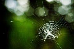 Animal, insecto en el bosque Fotos de archivo libres de regalías