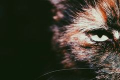 Animal instinct. A picture of my cat Stock Images