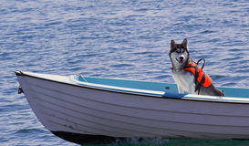 Animal Insurance. Photograph of a life vest protected dog on the open sea, animal insurance concept Royalty Free Stock Photos