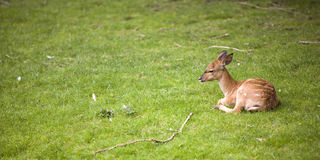 Animal joven foto de archivo