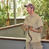 An animal keeper with a python. An animal keeper showing a black headed python at Lone Pine Koala Sanctuary royalty free stock images