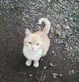 Animal. Kucing di halaman depan rumah Stock Photography