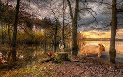 The animal lake Stock Images