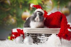 Animal, lapin, lapin sur le fond de Noël photo libre de droits