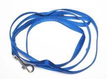 Animal leash. Closeup of animal leash on white background Stock Image