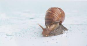 Animal lento Fotos de archivo