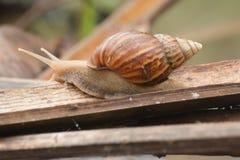 Animal lento Fotografía de archivo libre de regalías