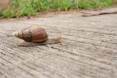Animal lento Imagenes de archivo