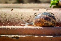 Animal life. Macro shot of a snail Stock Photography