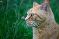 Animal life. Portrait of a cat on a summer day stock photo